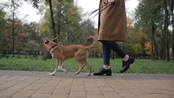 Nízké pohled anonymní žena chůze psa v parku