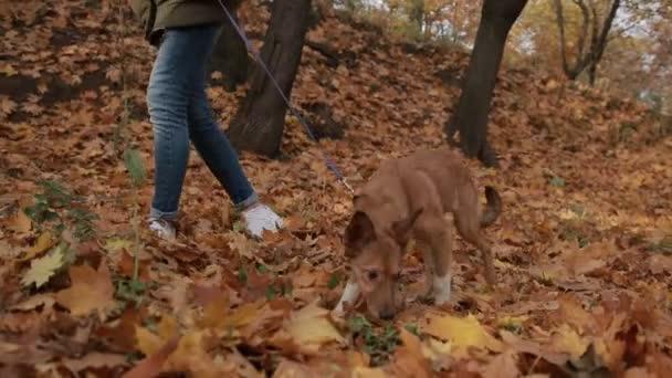 Mladá žena a její mazlíček si procházku v lese