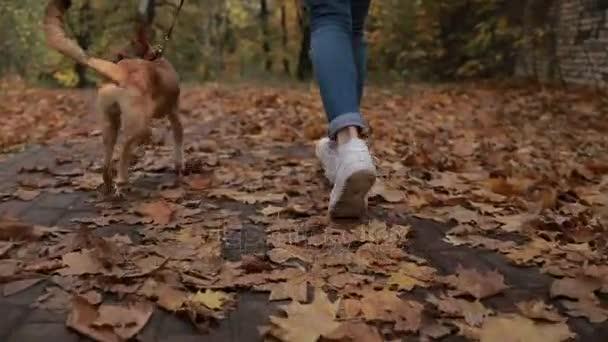 Žena s roztomilý pes běhat na podzim park