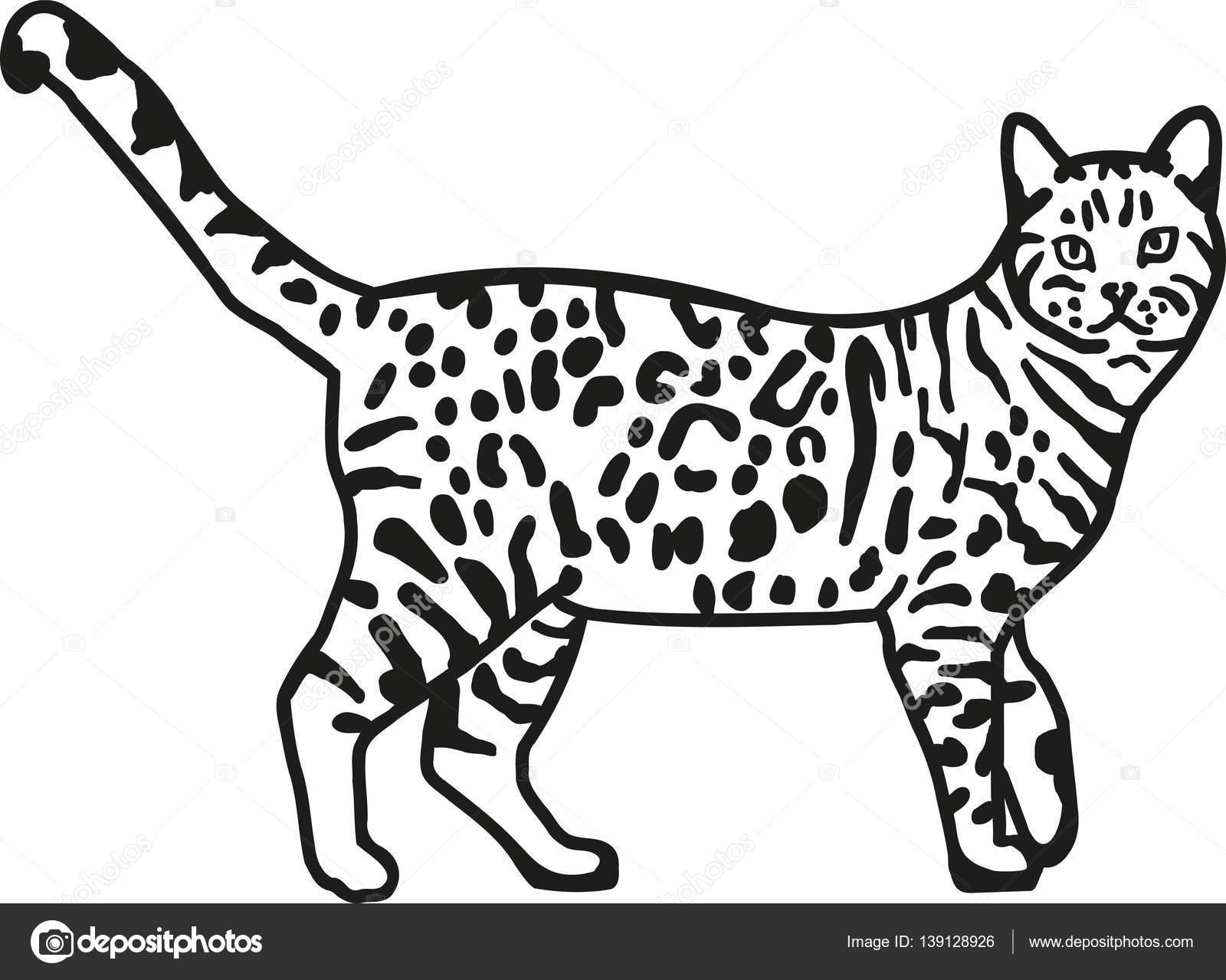 делают бенгальский кот картинки раскраски наличии заказ