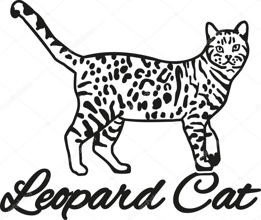 бенгальский кот картинки раскраски девушка как-то
