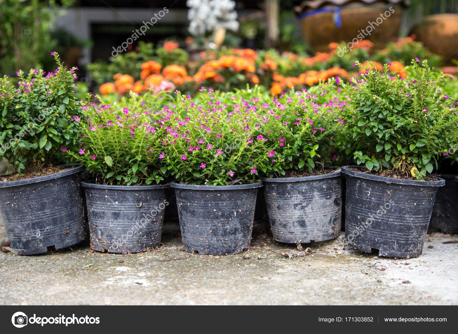 Sprzedaz Ogrod Kwiaty W Doniczkach Zdjecie Stockowe C Puhimec