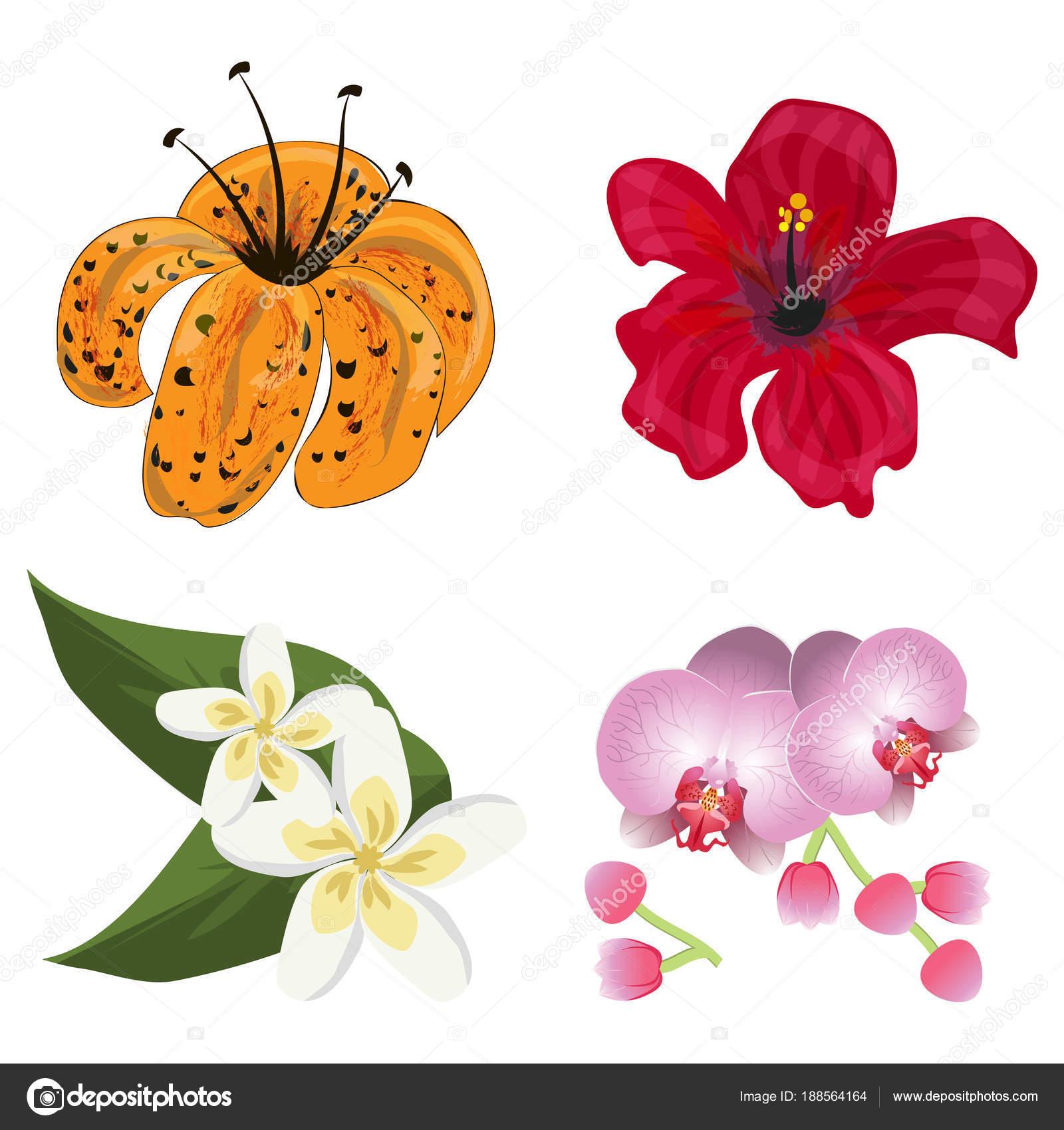 Imagenes Flor Hawaiana Vector De Flor Flora Tropical Floracion