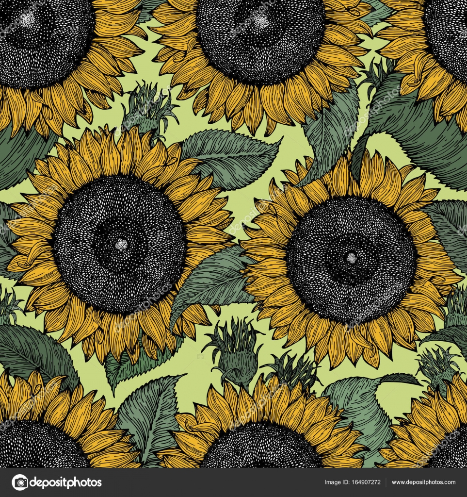Sunflower Seamless Vector Pattern Background Vintage Illustration Stock