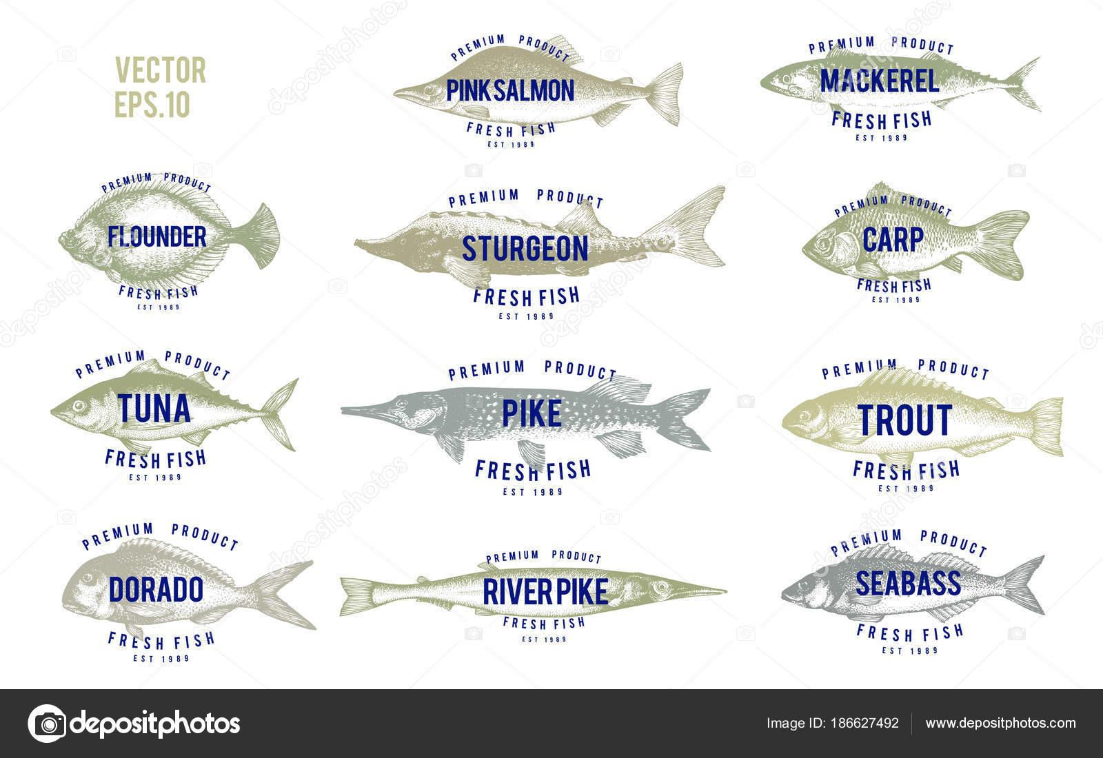 Mano dibuja ilustraciones de peces con nombres estilo retro sobre ...