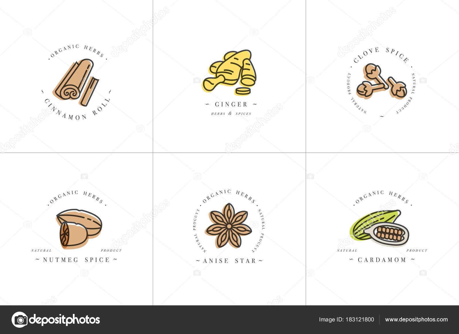 Vektor setzen bunte Vorlagen Logo Design und Embleme - Kräuter und ...