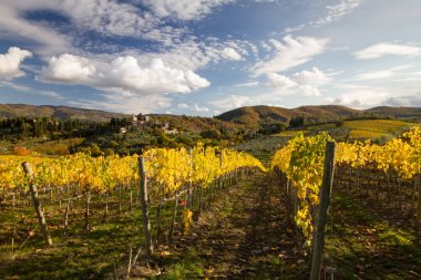 Colorful and bright path between the vines of the Tuscan landscape in the fall