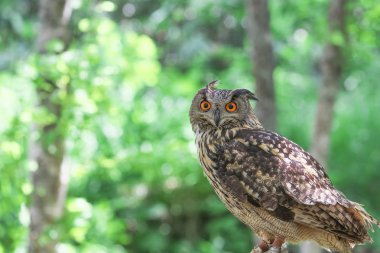 owl in green forest
