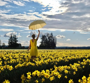 Woman  in daffodil field with yellow umbrella.
