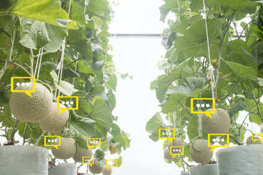 the bubble chat data the detect by futuristic technology in smart agriculture with artificial intelligence to improving yield, efficiency, and profitability in the farmthe bubble chat data the detect by futuristic technology in smart agriculture with