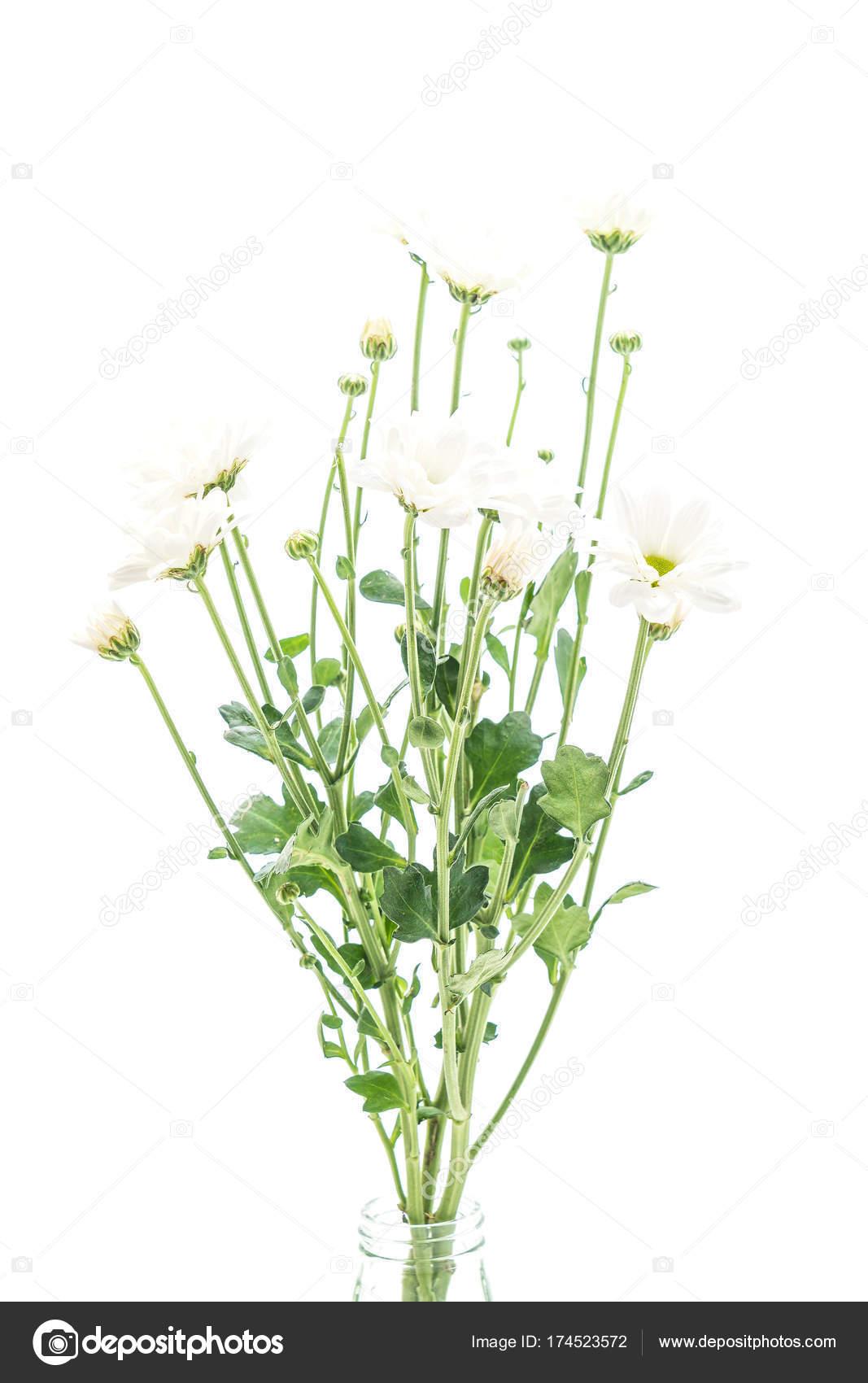 White mum flowers stock photo topntp 174523572 white mum flowers stock photo mightylinksfo