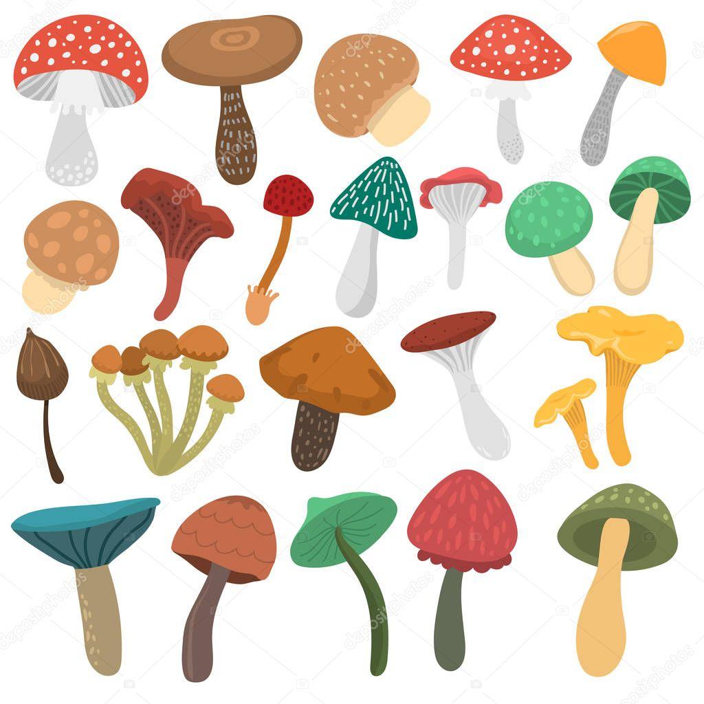 Mushrooms vector illustration set