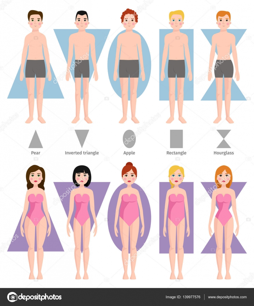 Vector Illustration Of Different Body Shape Types Stock