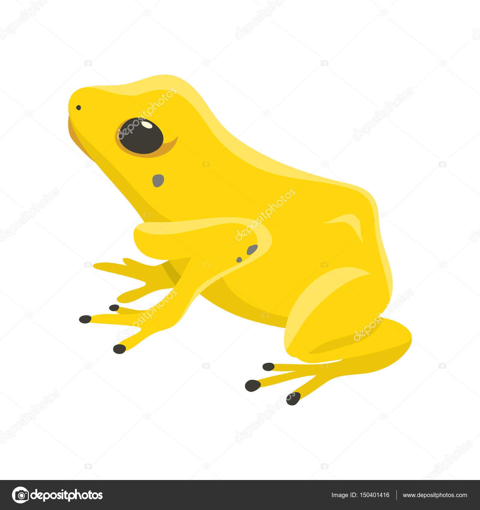 Dartfrog Phyllobates Terribilis einen gefährlichen Frosch aus dem ...