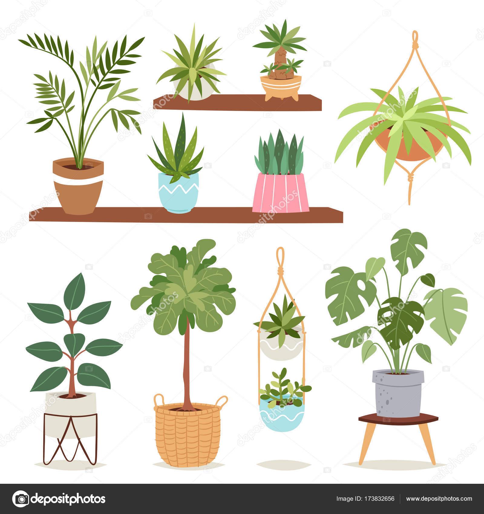 Haus Pflanzen Baum Natur Blumen innen Innendekoration Zimmerpflanze ...