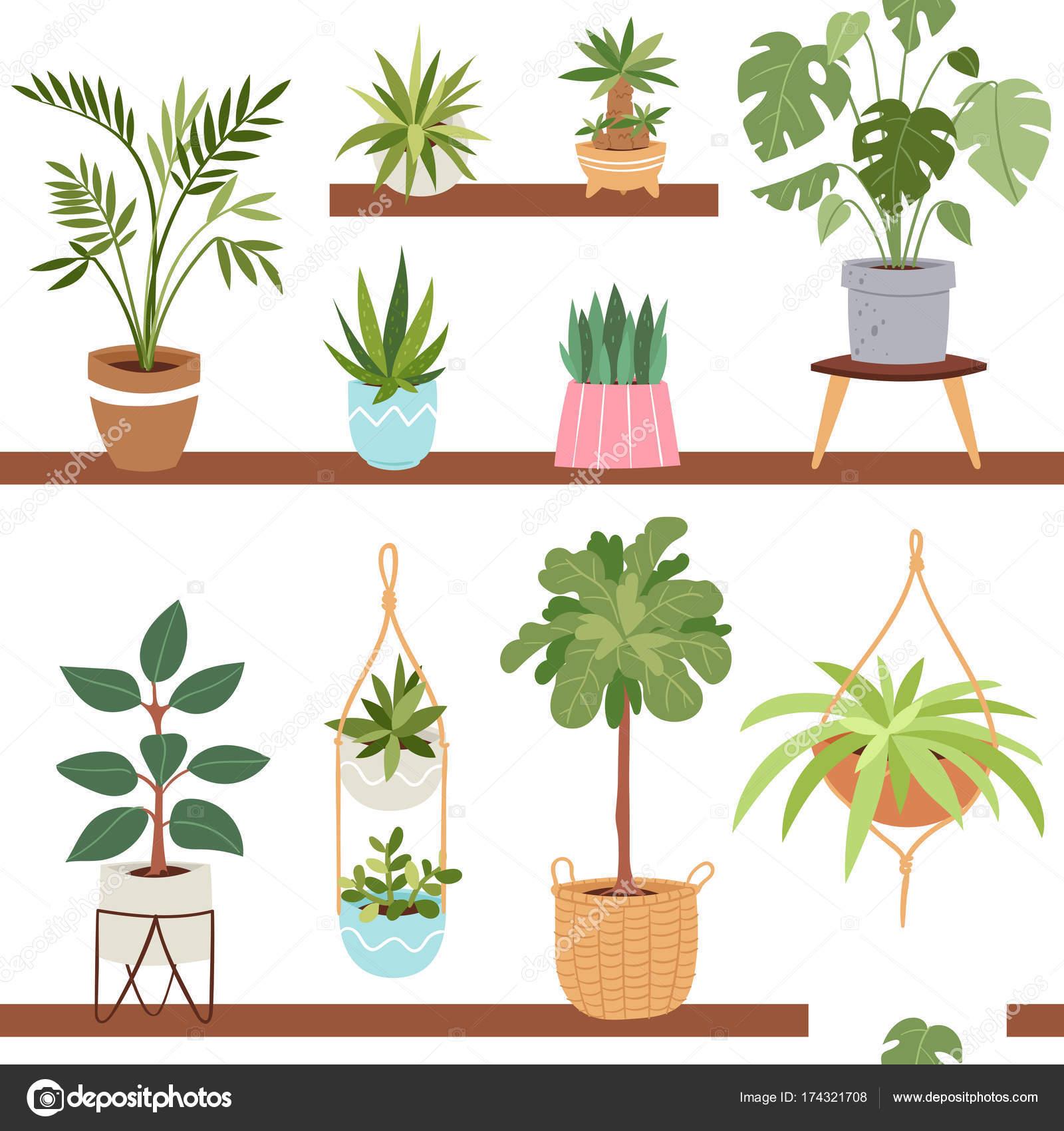 Haus innen Vektor Pflanzen und Natur hausgemachte Blumen im Topf ...