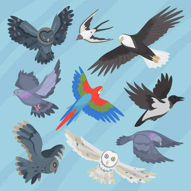 Different flying birds breed species race strain stock colorful owl isolated animal wild with beak vector illustration
