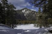 Stromy v horách. Krajina a příroda severního Kavkazu