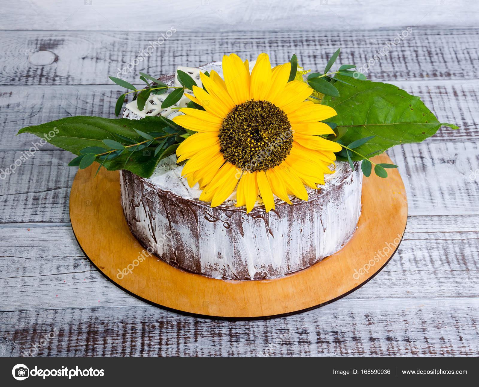 napraforgó torta képek világos napraforgó nyári csokoládé torta — Stock Fotó © tusya119  napraforgó torta képek