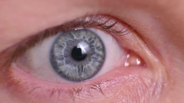 eye close up. human female eye