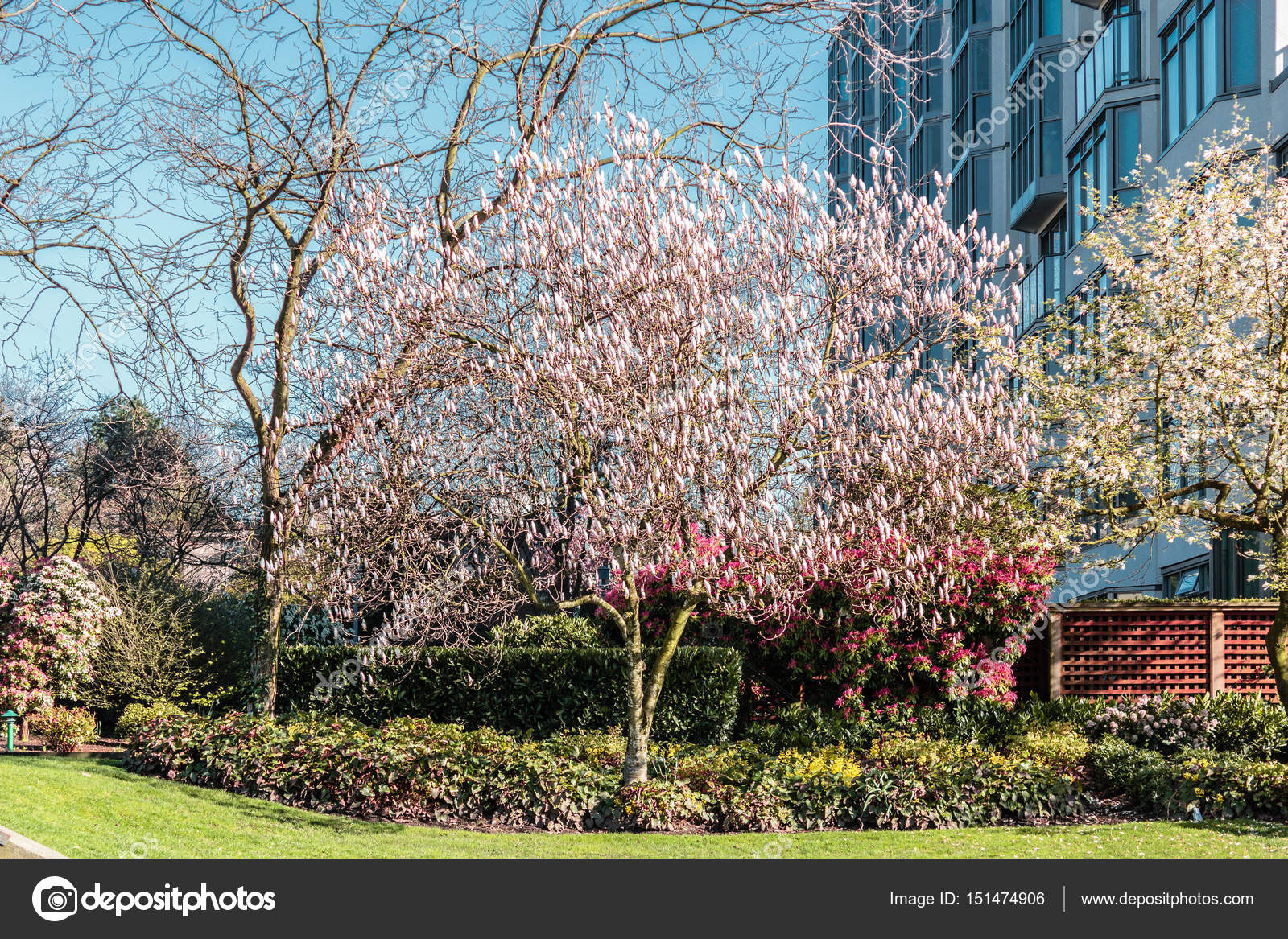 Trees And Flowers In Spring At Vancouver Bc Canada Stock Photo