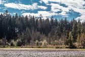 Fotografie Beaver Lake in Stanley Park, Vancouver, BC, Canada