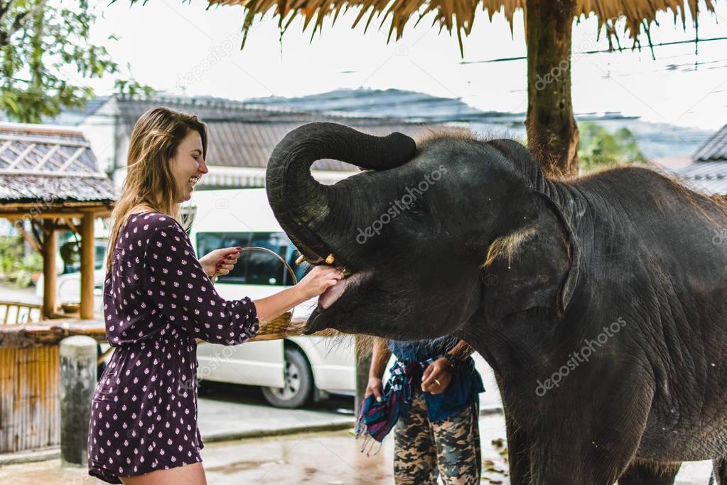 Girl Feeding Baby Elephant in Thailand