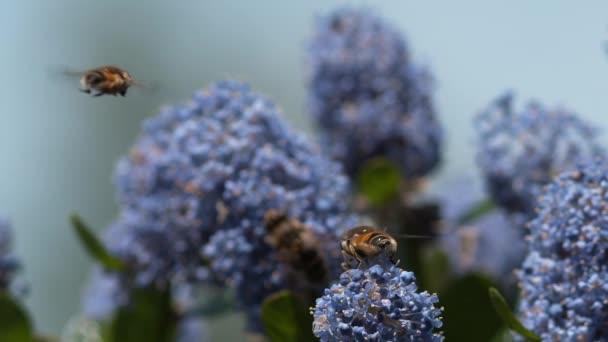 Méhecske Virág felett repülő