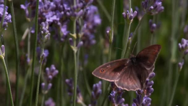Server Gatekeeper Butterfly sběru nektaru