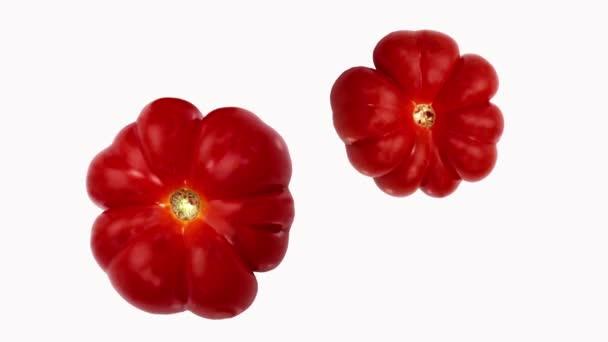 Camone a paradicsom, a solanum lycopersicum, zöldség, fehér háttér, valós idejű 4k, mozgó imge