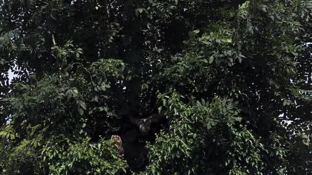 Sýček obecný rozbíhá od stromu