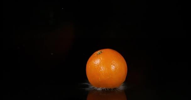 Pomeranč, citrus sinensis, ovoce padající na vodě proti černé pozadí, Slow Motion 4k