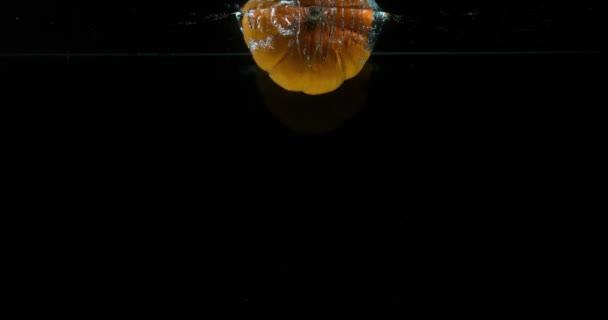 Trpaslík dýně, cucurbita pepo, ovoce pádu do vody proti černé pozadí, Slow Motion 4k