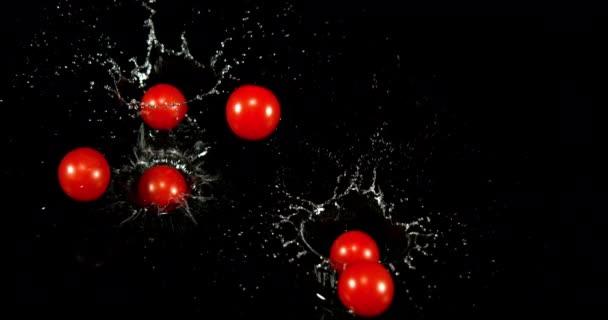 Rajčata třešňová, solanum lycopersicum, ovoce padající na vodu na černém pozadí, pomalý pohyb 4k