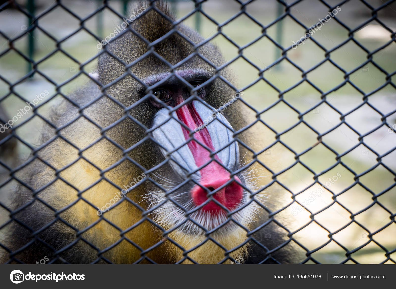 Image result for baboon in cage