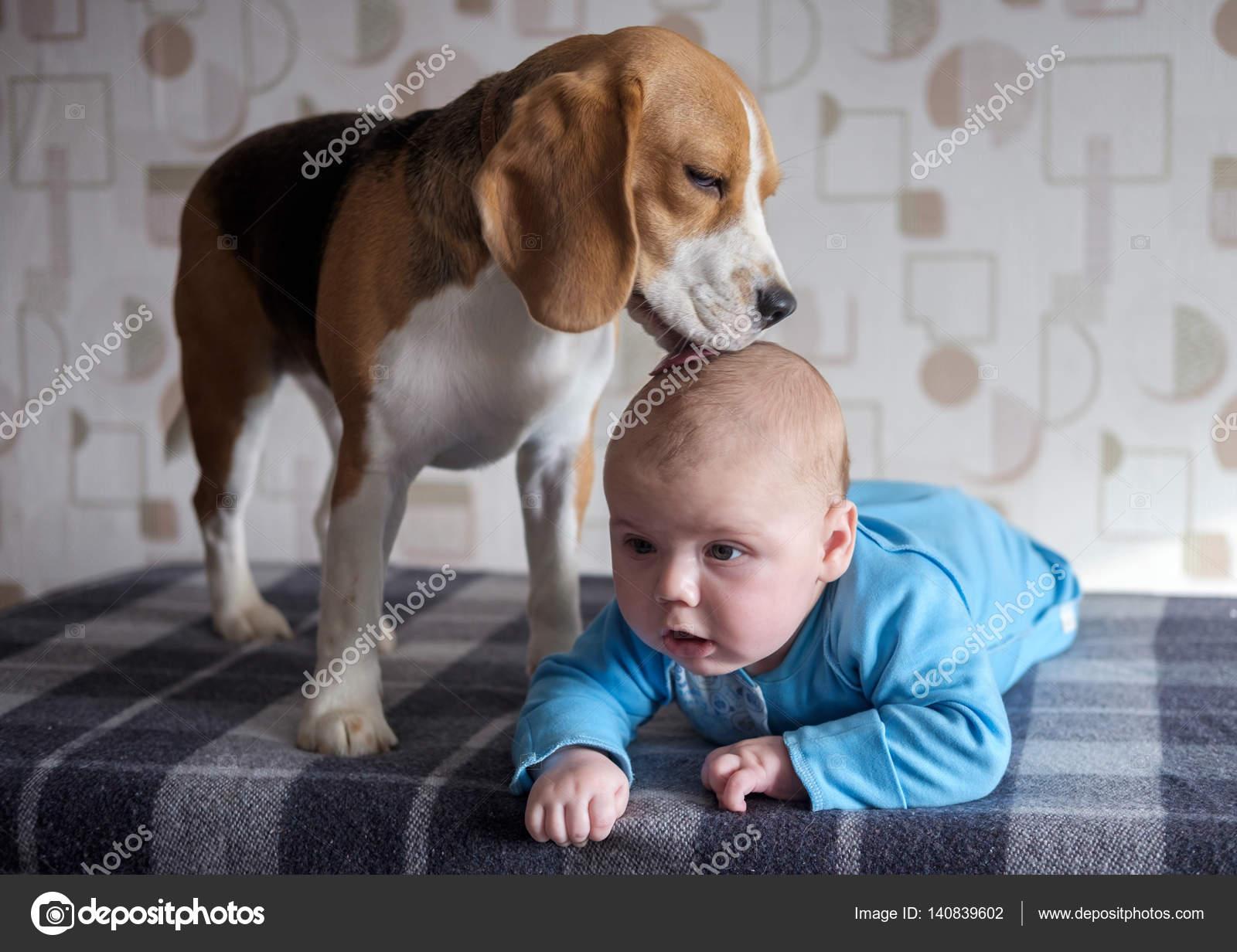 бигль для ребенка