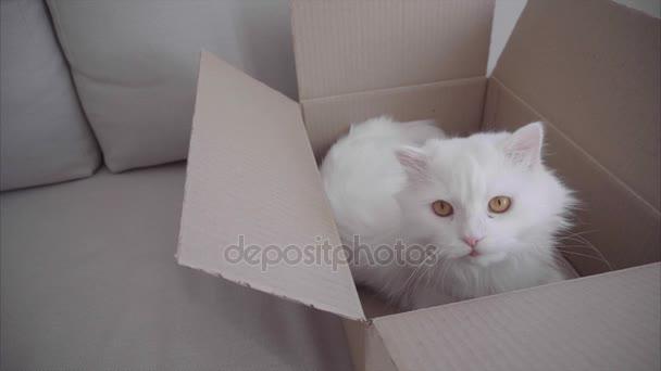 Bílá kočka ležící v poli a hry hračky které hází hostitelka. Box s kočka leží na bílé pohovce uvnitř.