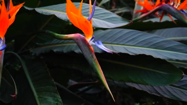 Exotic flowers grow in private park, close-up photography.