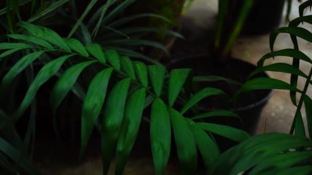 V popředí rostou zelené listy a na pozadí hrnce s půdou