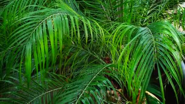 zár-megjelöl szemcsésedik-ból Pálma levél, növényi élet hosszú levelekkel.