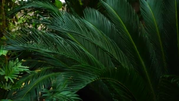 Krásné rostliny s dlouhými listy rostou v zahradě