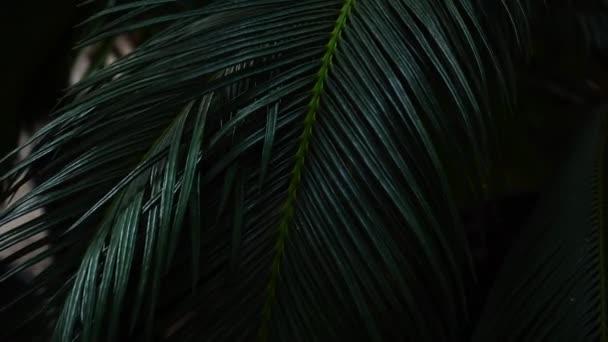 Rostlina s dlouhými listy roste v temném lese