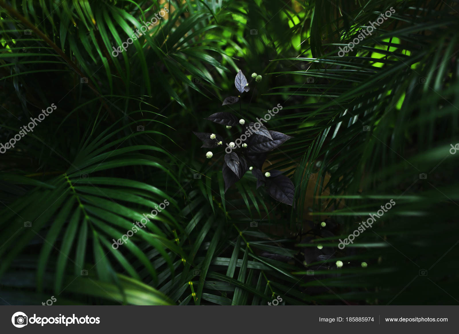Dark Fantastic Portrait Of Green Palm Leaves And Flower Stock Photo C Sisterspro 185885974 Skip to end of carousel. depositphotos