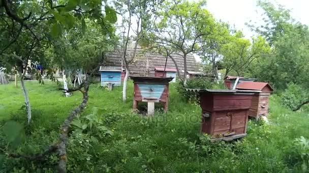 Las abejas estn volando en cajas de madera azul de la colmena en el