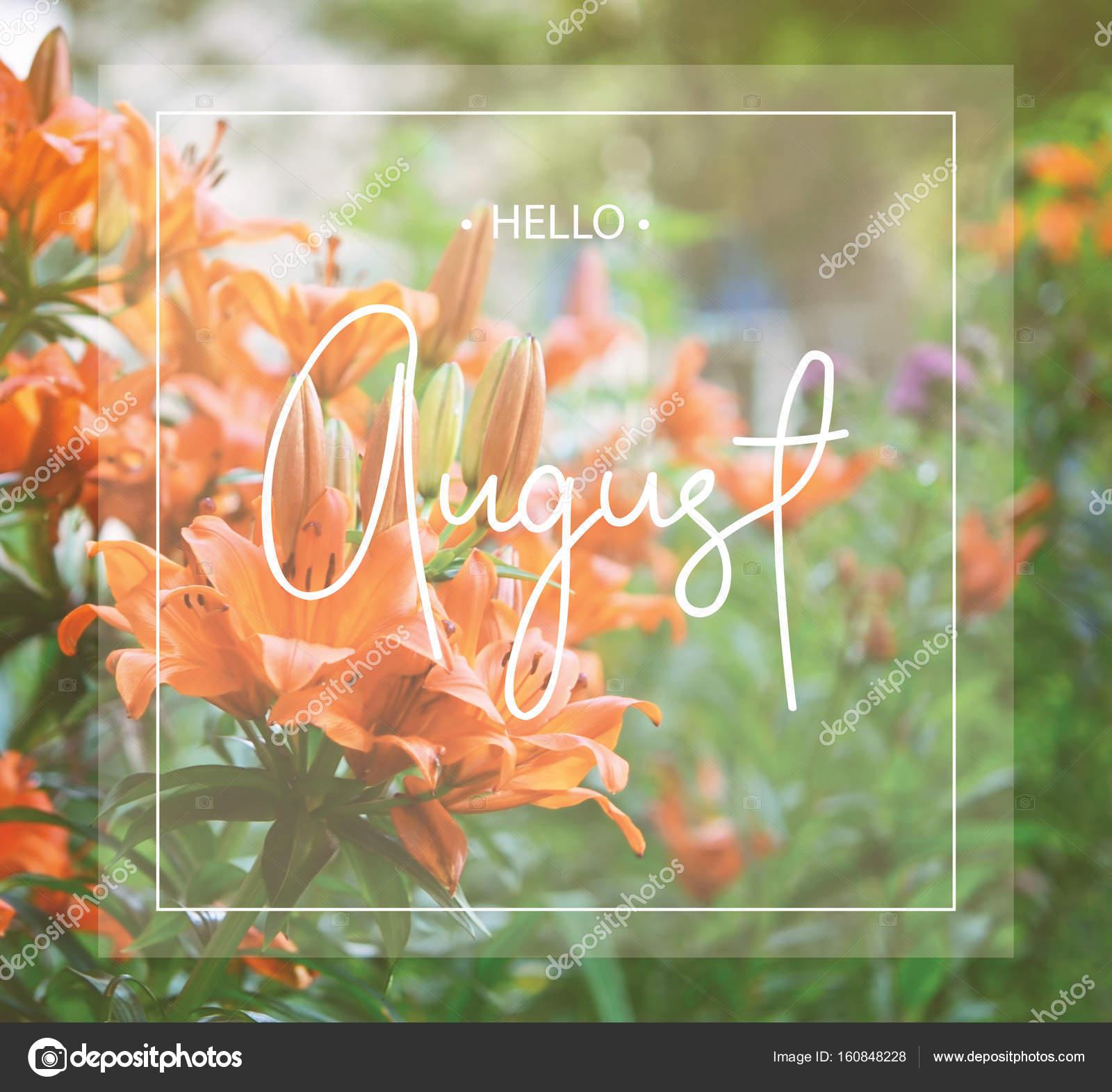 Bonjour Aout Carte De Voeux Avec Fleur De Lilium Photographie
