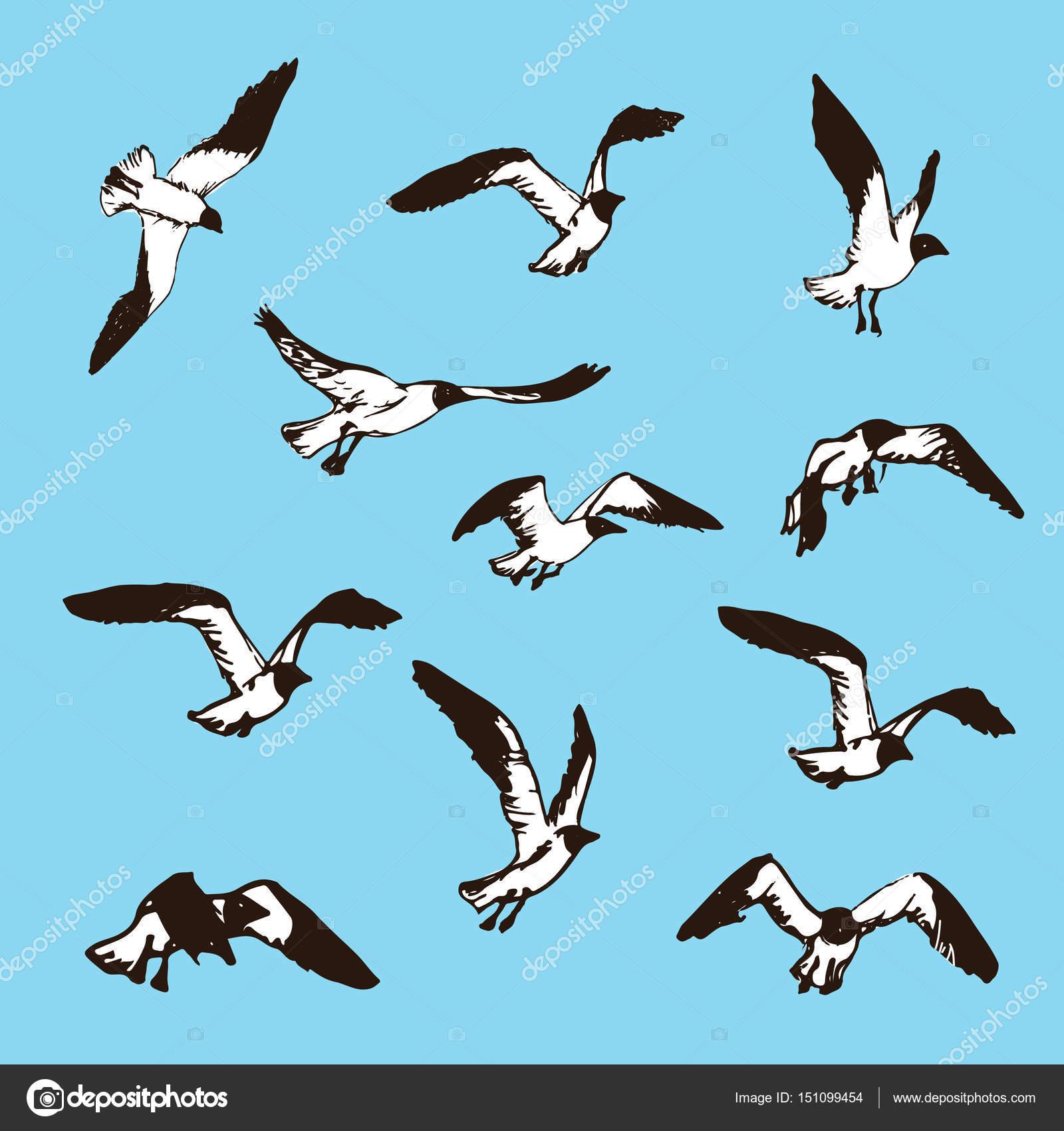 Croquis d oiseaux dessin illustration de mouettes image - Dessins de mouettes ...