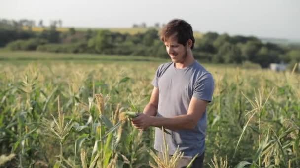 Mladý zemědělec kontrolu kukuřičné klasy na poli ekologického Ekofarma.