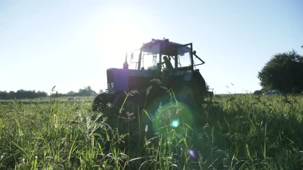 Tractor drives over the potato field. Harvesting potatoes with using tractor.