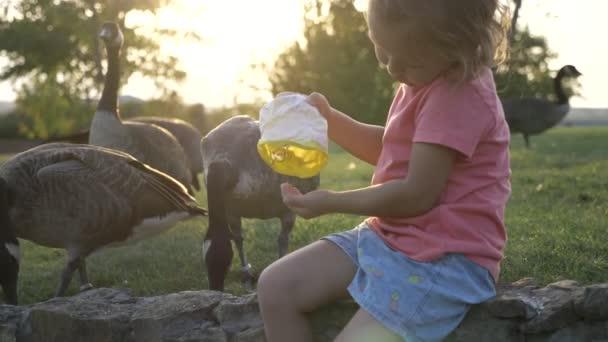 Nina Linda Alimentacion De Gansos Salvajes En Prado Verde Verano