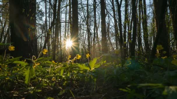 ráno v lese na jaře